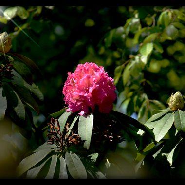 lone flower in sunlight.