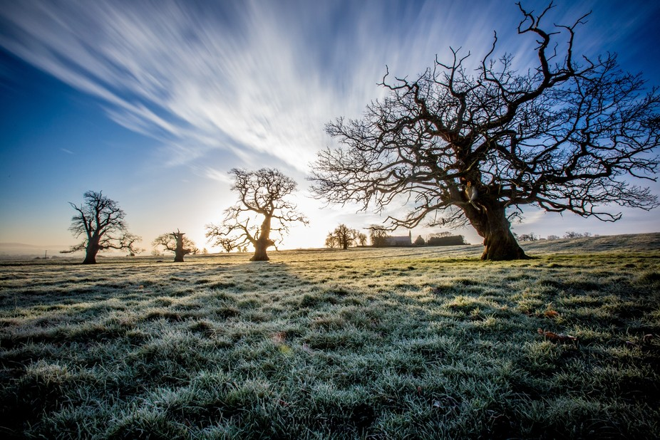 Trees at Sunnrise, in a field near Narraghmore, Co. Kildare