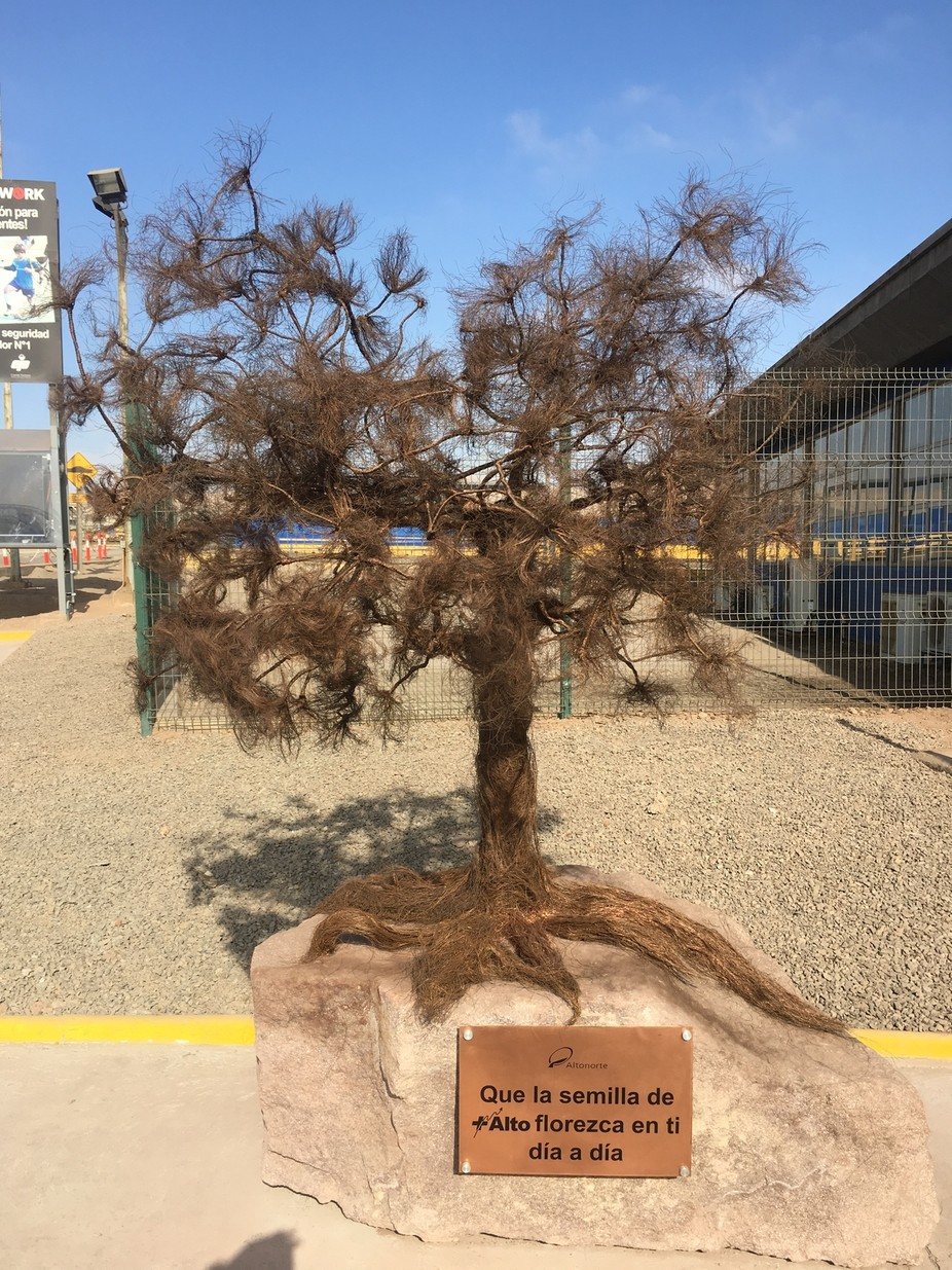 Copper Tree - Altonorte - Antofagasta