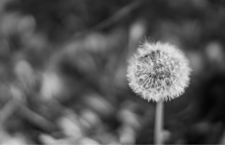 Some see a seed, some see a wish.