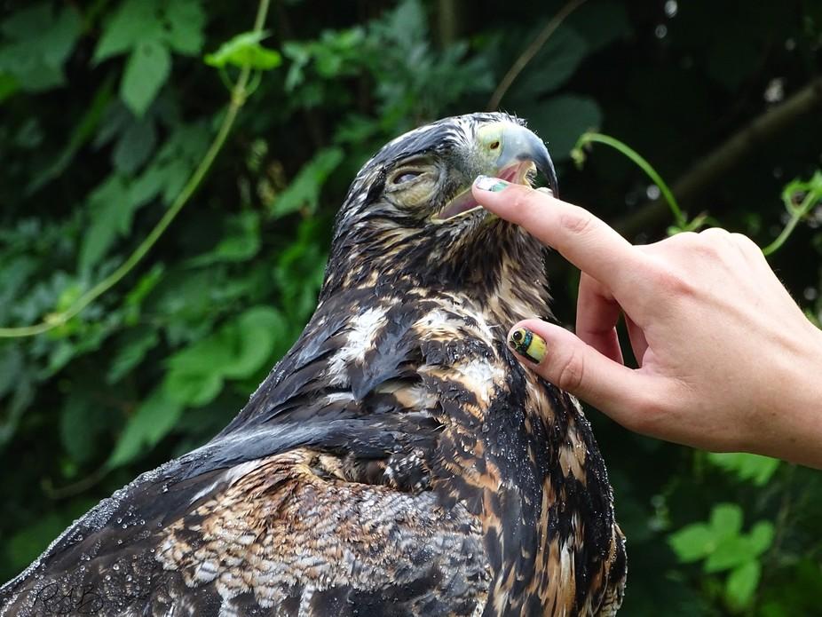 Bird of prey photography workshop in the garden