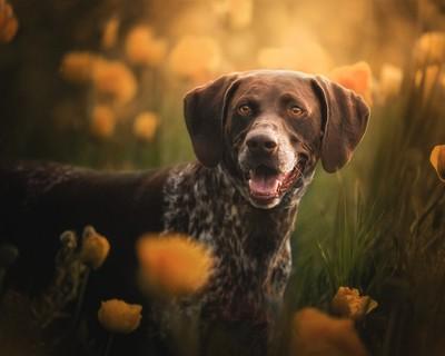 Pups n' Poppies