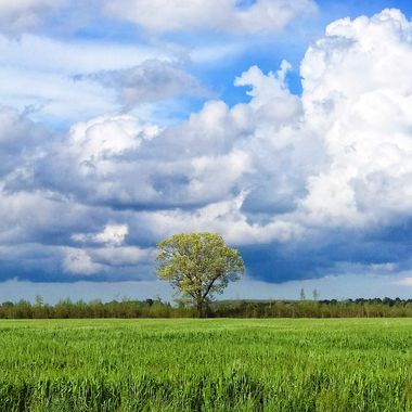 Lone Tree with Clouds