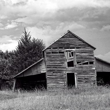 Leaning Old Barn BNW