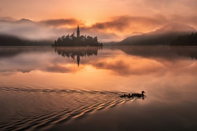 Lake Bled on a misty summer morning on a colorful sunrise with just the perfect amount of fog on the lake. by Theo-Herbots-Fotograaf