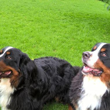Archie an Millie 6/7