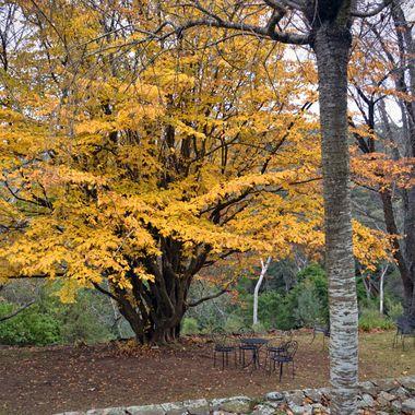 Last Colours of Autumn - Everglades Gardens, Leura, NSW
