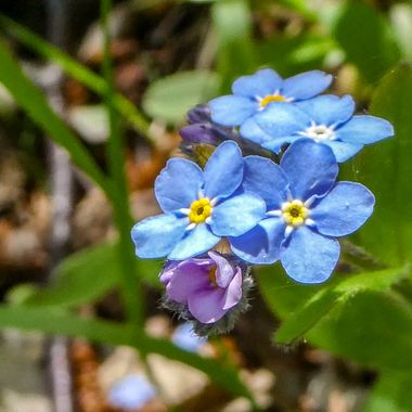 wild flowers on the forest floor