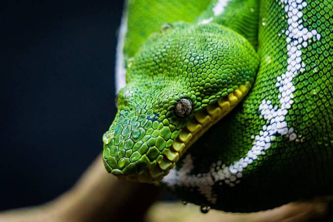 FB_IMG_1528482151381 by NateEllingson - Reptiles Photo Contest