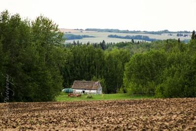 In The Prairies
