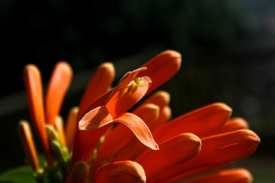 Su color cálido alimenta,alegra y enriquece el alma.