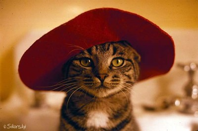 Red Hatted Kitten