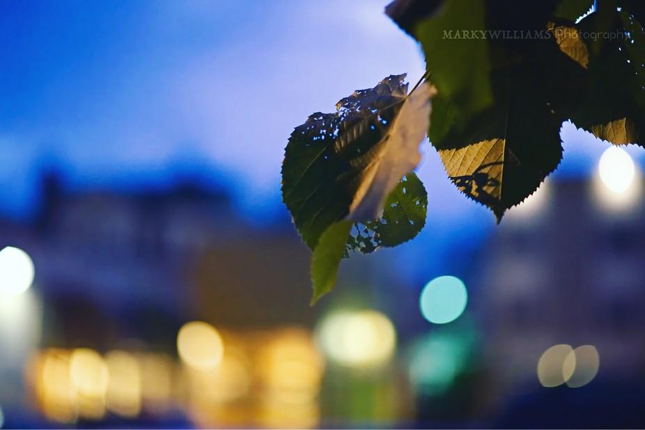 Nikon D4 85mm
