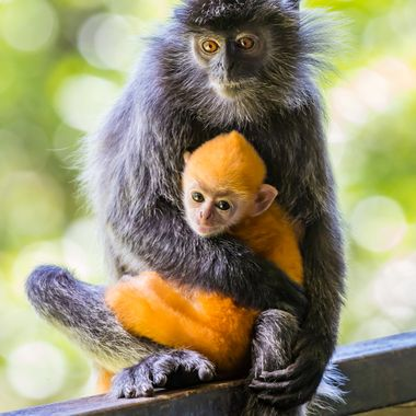 Mother holding a baby.  The color of the baby will change as it grows.
