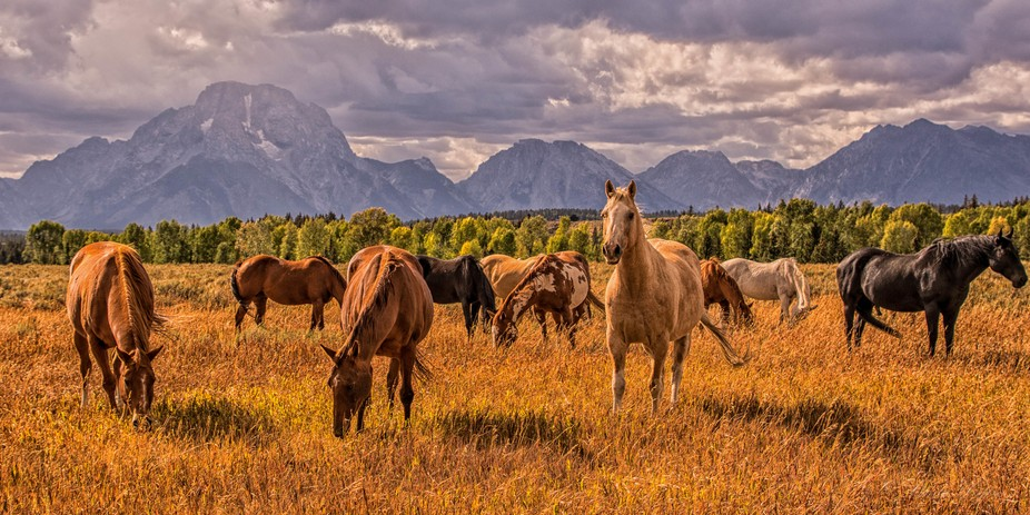 Gorgeous fall day in the Tetons with a great photo op