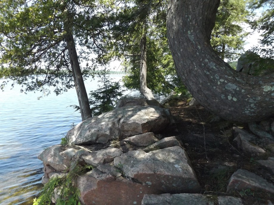 Trees curve around reddish, chopped rocks, where their exposed roots are clinging in profusion. T...