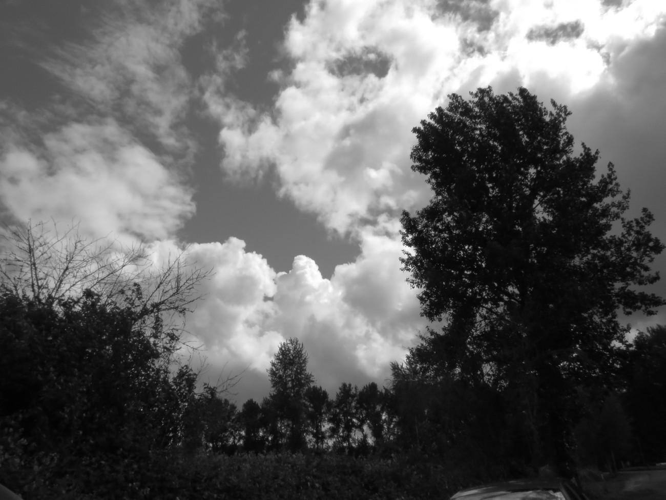 Clouds & Trees