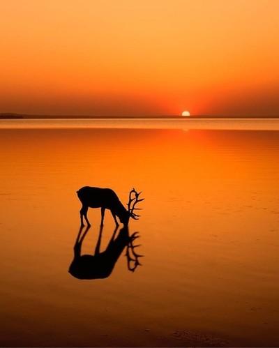Sunset . . . . . .  #explorealberta #travelalberta #Canada #explorecanada #imagesofcanada #sharecangeo #canadasworld #splendidcanada #tourcanada #canadaday #myrrs #nikon_canada #beyondthelands_ #earthpix #500px #epic_captures #ig_shotz #depthsofearth #our