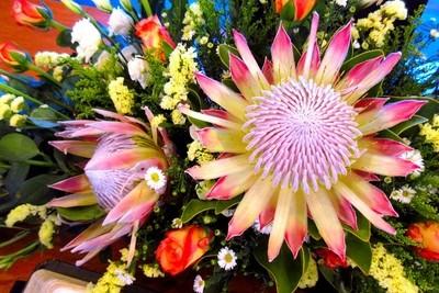 Protea Flower 4
