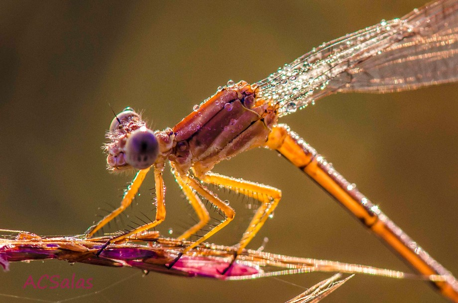 At an ungodly hour one morning armed with my camera gear, including a new Nikon micro lens, I mar...
