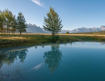 Early morning Abrahams Lake