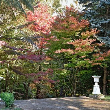 Colours of Mount Wilson (18)