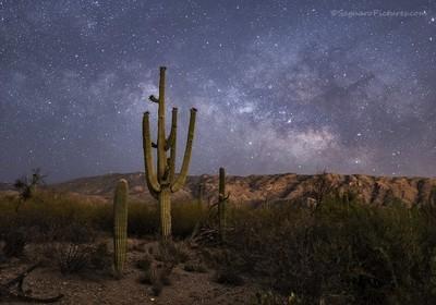 Saguaros at Night