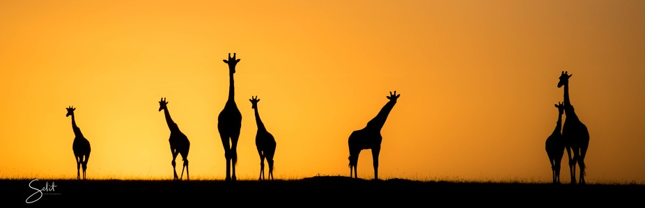 Sunset setting on the plains of Africa