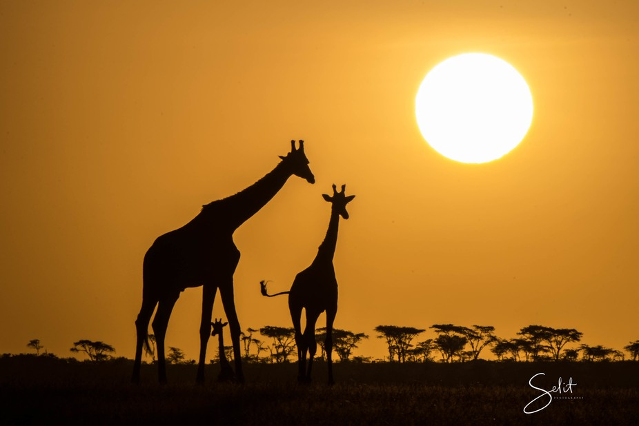 Sun setting on the plains of Africa