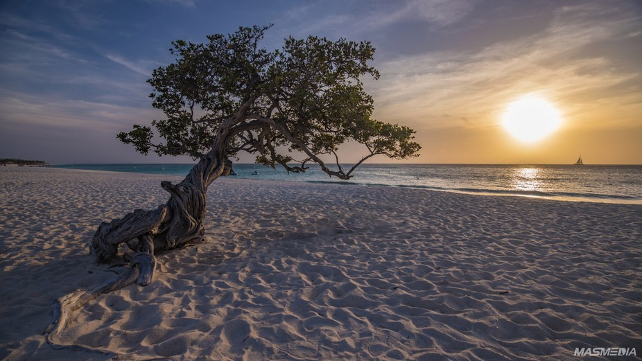 Sunsets by the divi-divi tree
