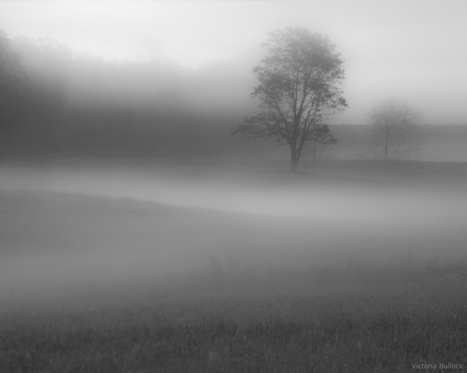 Foggy Morning in B&W