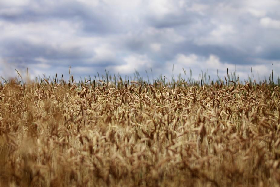 Fields in Western PA