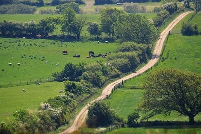 Rural Country Lane Early Summer in Dorset