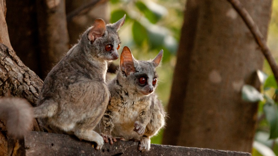 Luckily  there was still enough light to get a photo of these little guys. They are not easily se...