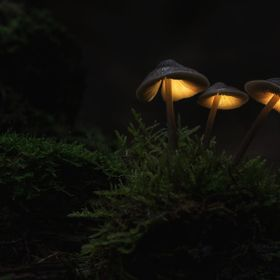 Three little mushrooms in the dark and mystical forrest. Hope you like my glowing mushroom images ;)