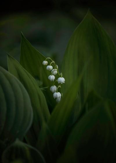 One of my favorite spring flowers.
