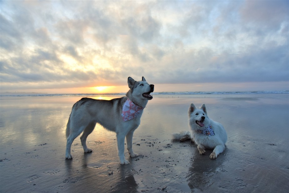 Image of our girls taken whilst on an evening stroll, at Carters Beach (West Coast, New Zealand)....