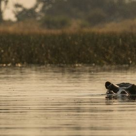 In the Okavango Delta in Botswana, we did a Mokoro ride. Mokoros are traditional boats, which are usually carved out of one tree. Nowadays indige...