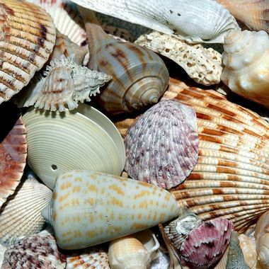 Collection of beautiful and color sea shells collection on the beach at Sanibel Island, Florida