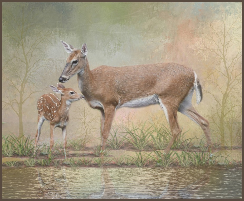 Doe Fawn Water Texture Art