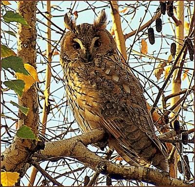 The owl ... very suspicious!