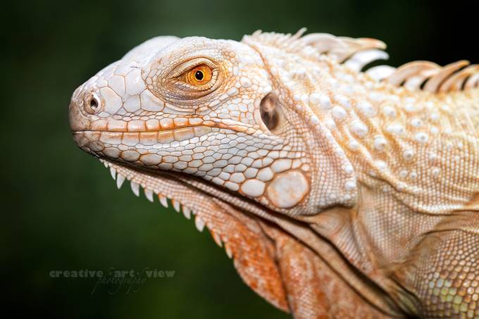 from the past by CreativeArtView - Reptiles Photo Contest