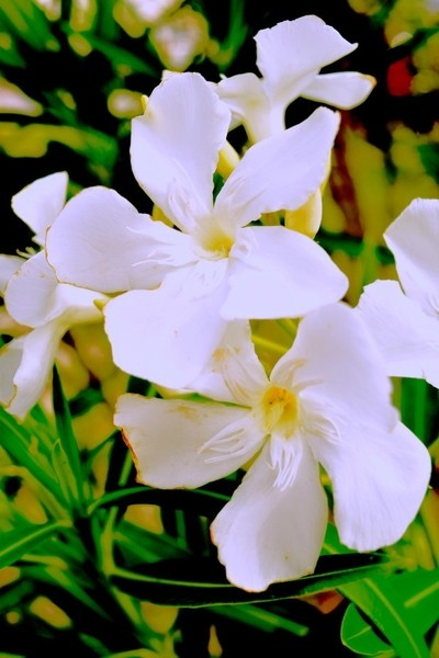 White Flower from the Florida Panhandle