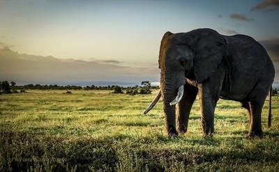 Elephant Near Mount Kenya
