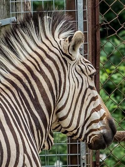 Marwell Zoo-2