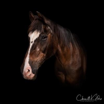 Horse portrait of elderly gentleman
