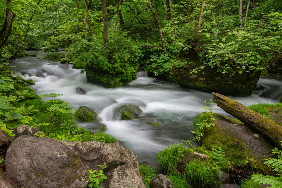 The Oirase River, which flows through the Oirase Gorge in Towada-Hachimantai National Park, is on...