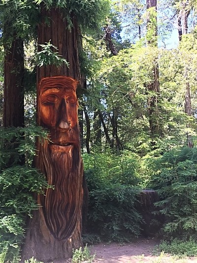 Redwood Face Carving