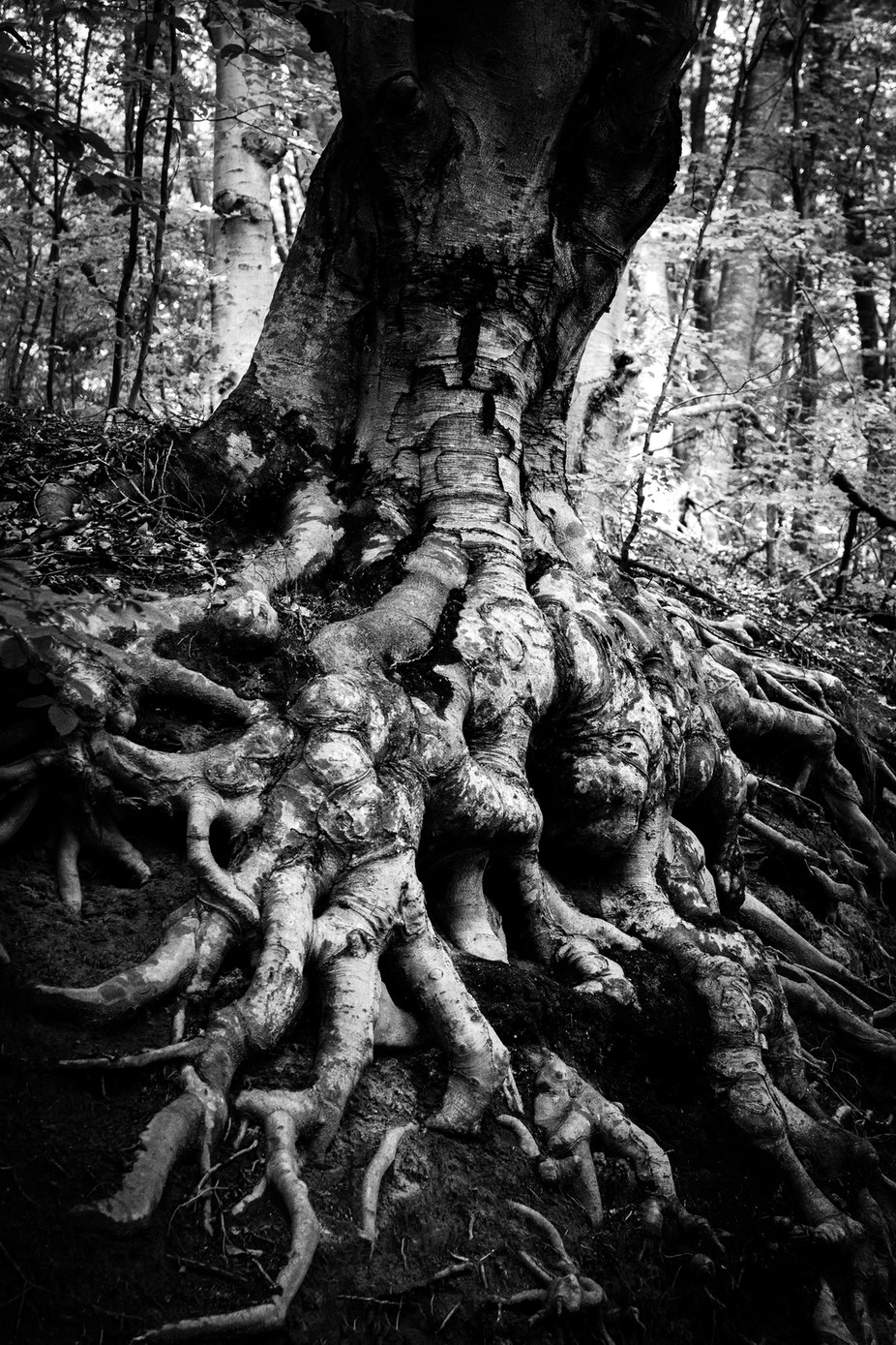 Old Tree by whiteshipdesign - Our World In Black And White Photo Contest