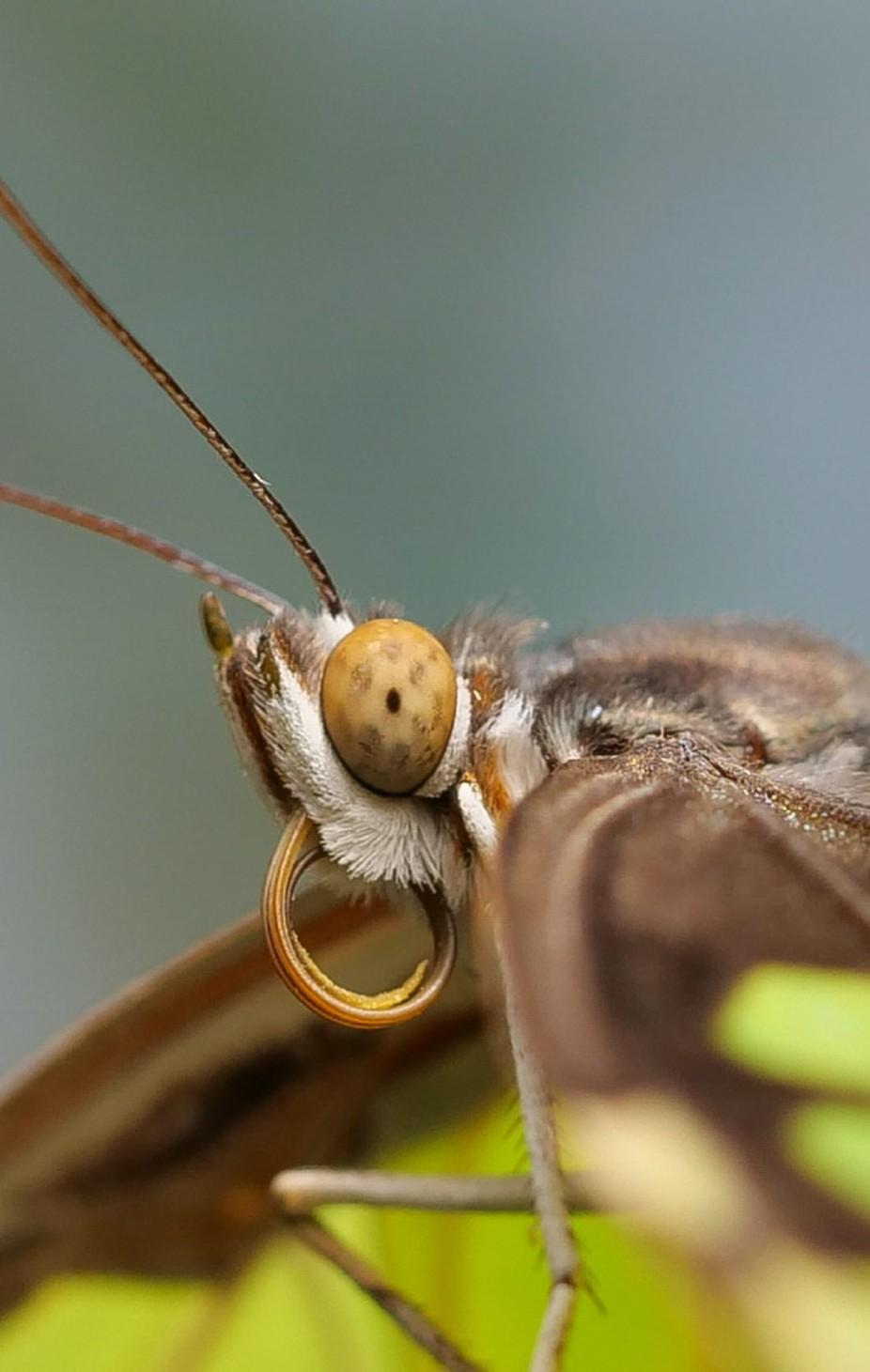 Butterfly macro by Wobbleslovesphotos - Covers Photo Contest Vol 48